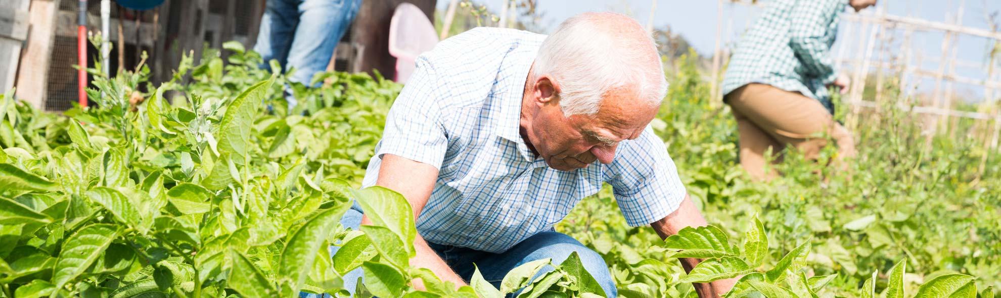 LoveInCare dagbesteding voor senioren met lichte dementie